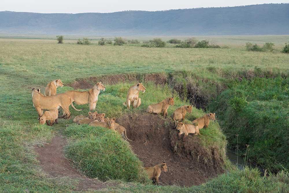 Ngorongoro 2a